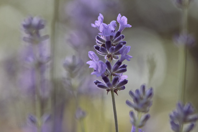 In a Purple Patch