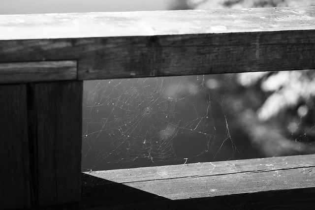 No spider on a bridge