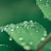 Raindrops 2.021
