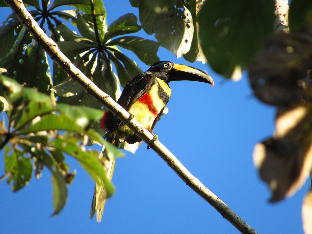 - Reserva ProAves El Jaguar - Foto: Daniel Villar