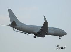 230721 - Argentine AF B737 - T-99 - lemg (13)