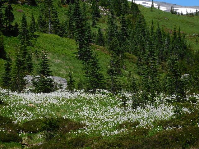 Glacier Lilly White by Nina