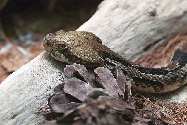 Toledo Zoo 06-27-2011 - Snake 4