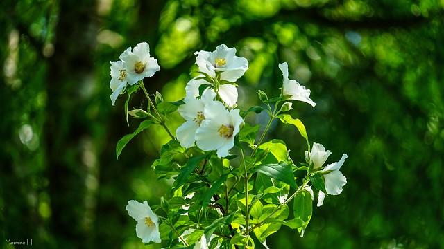 9985 - Flowers