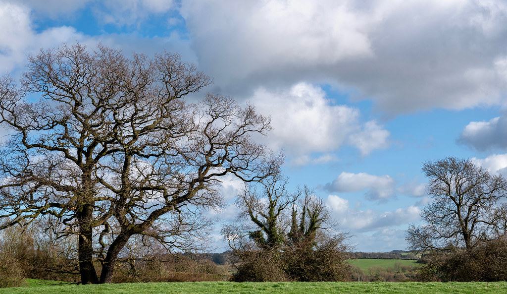 Horsley over the fields