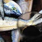 caffé et sardines