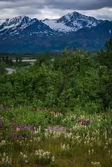 2021 Alaska Whales-.jpg