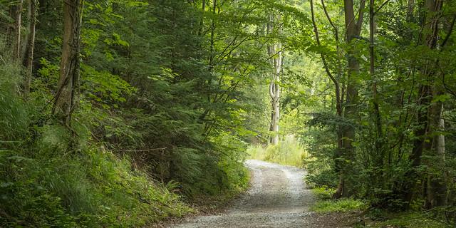 Woodland, Rhydymwyn  area, N/Wales, UK, 2021.