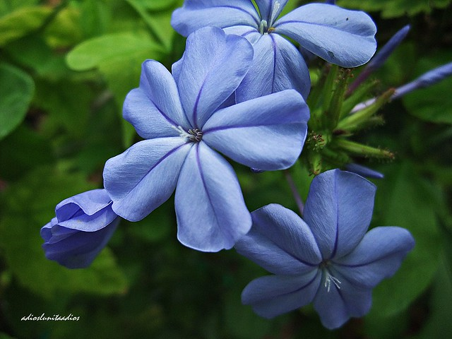 belleza en azul 051