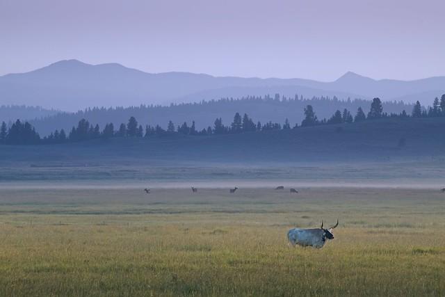 Longhorn Deer Mountains at Sunrise 0292 B