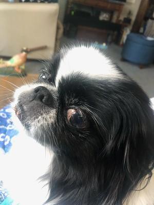 Close up of Oliver