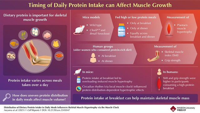 INFOGRAPHIC_Best time to consume proteins for building and strengthening muscles
