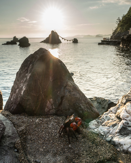 Crab of unknown gender and marital status enjoying the sunrise at the Married Couple Rocks