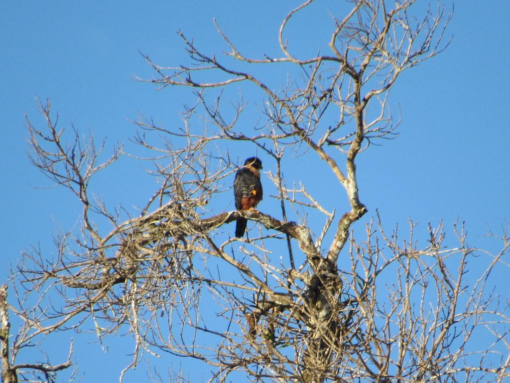 - Reserva ProAves El Jaguar - Foto: Leonel Silva