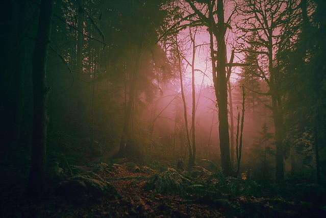 Rainforest Mist & Light