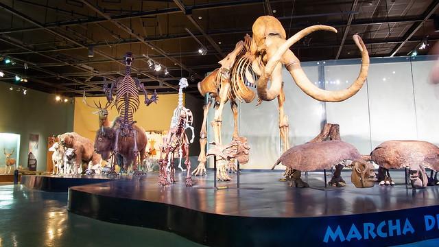 Museo del Desierto  -  Saltillo,  México  -  N3944