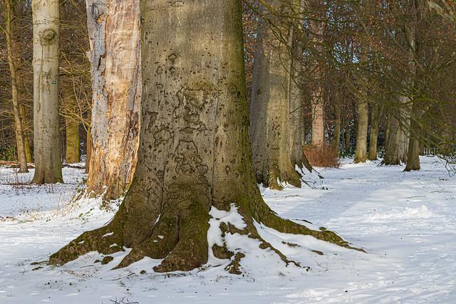 Trees in the snow - Bomen in de sneeuw