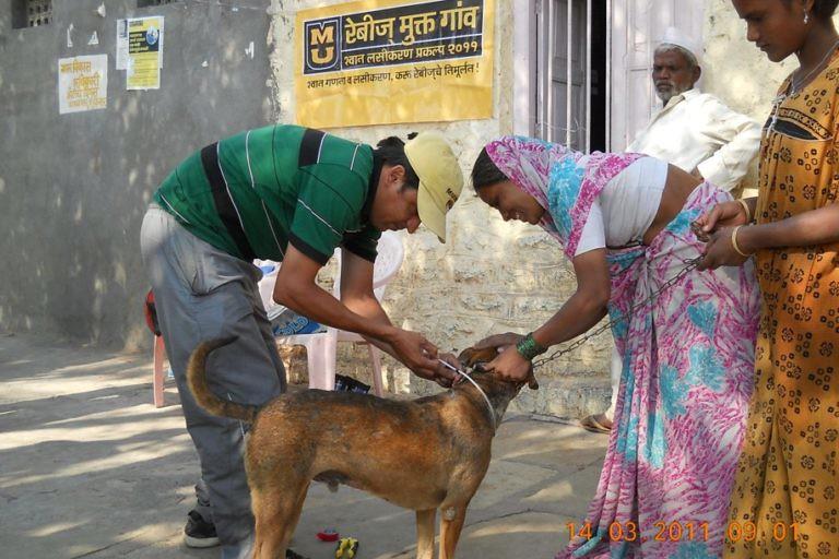 2犬隻疫苗注射活動是蒐集流行病學和族群資料的好機會,同時也能進一步釐清野狗對生態保育的威脅。圖片來源:貝爾賽雷(Aniruddha Belsare)。