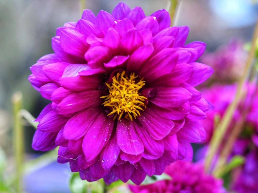 Day 209 Flower