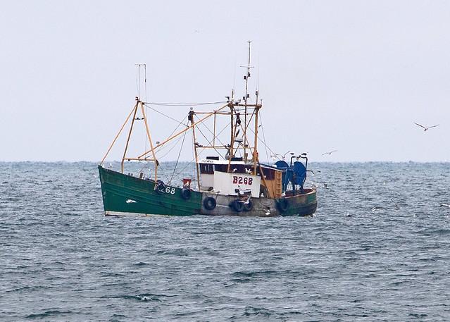 Portavogie Scallop Trawler 'The Way'