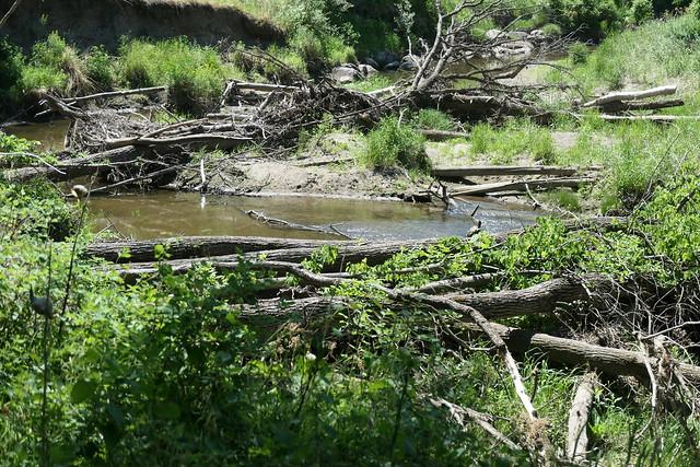 Turtle River State Park North Dakota