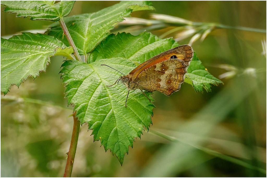 West Horsley Nature walk-8