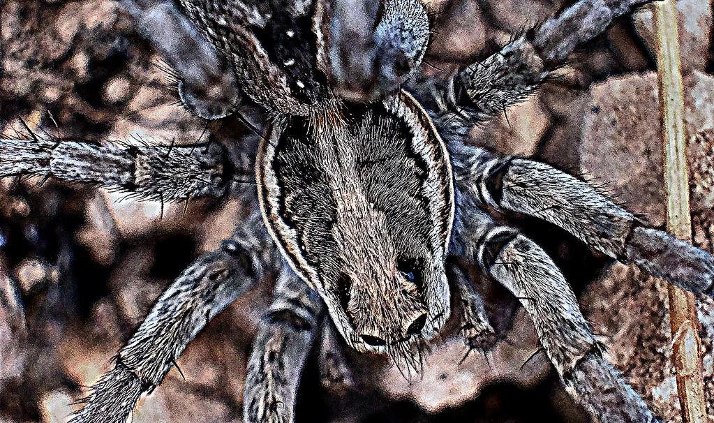 Spider (Macro)