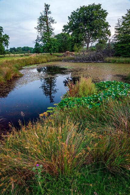Small lake, Barr Castle, Lochwinnoch, Rebfrewshire, Scotland, UK