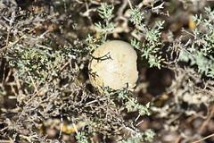 Cascarón de huevo en el tomillo