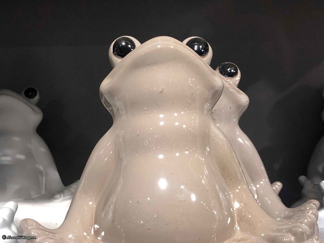grenouille-blanche©