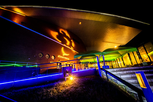 海響館-夜の水族館 2021 #1ーKaikyokan-An aquarium at night 2021 #1