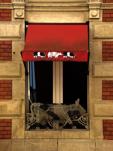 Cow Window
