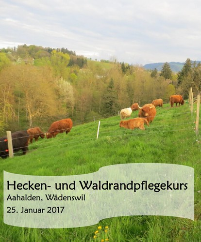 Heckenkurs_20170125