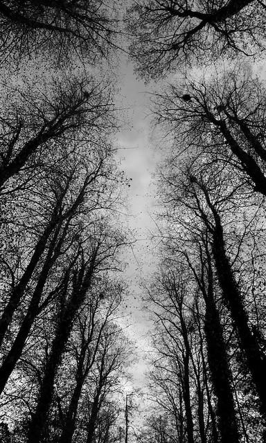 03_localwoodland