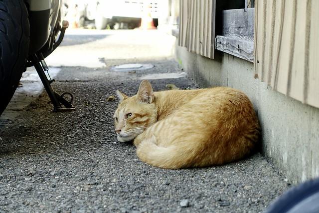 Today's Cat@2021−07−28