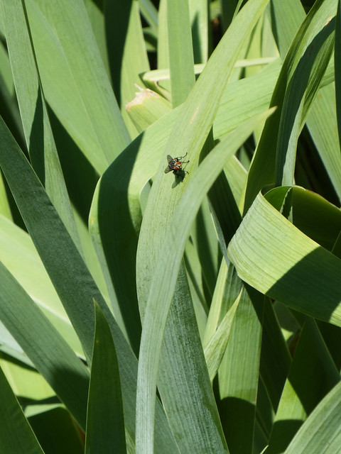 plant with fly