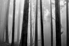 Magic Forest Series