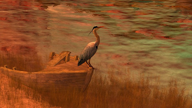 colors .. with heron  ..........      80 Days Jambo