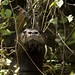 Flickr photo 'River Otter Up Close on the Ichetucknee' by: Phil's 1stPix.