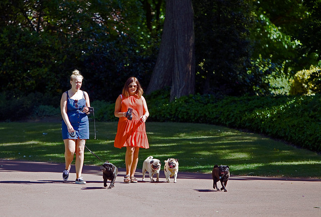 Dog Walking, West Park, Wolverhampton, May 2020