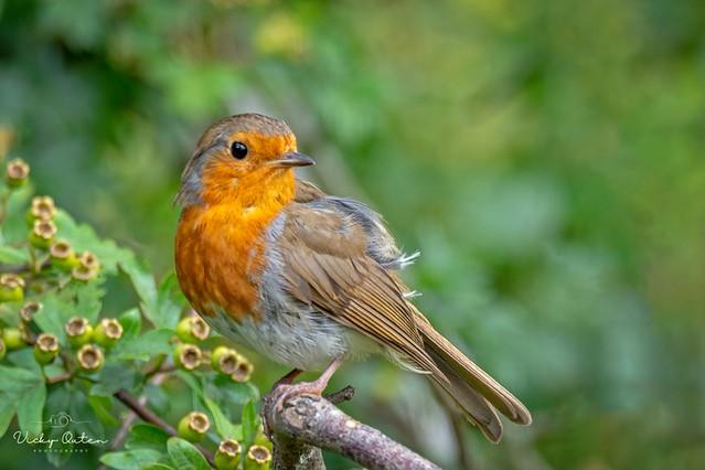 Robin (Explored 29/07/21)
