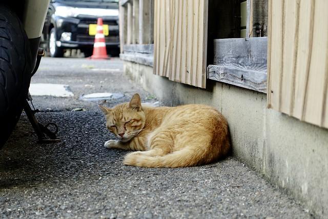 Today's Cat@2021−07−29