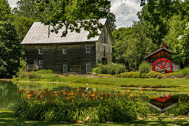 Egret and Day Lilies at Cook's Mill