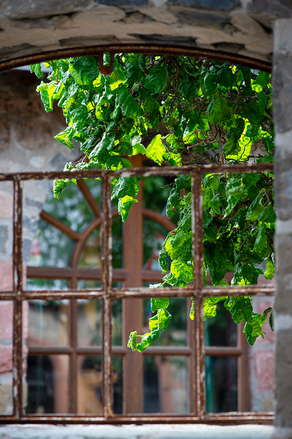 Green behi nd the rusty and glassless window frame