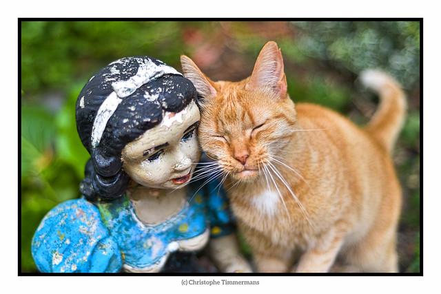 Blanche-neige est allergique au poil de chat !!!