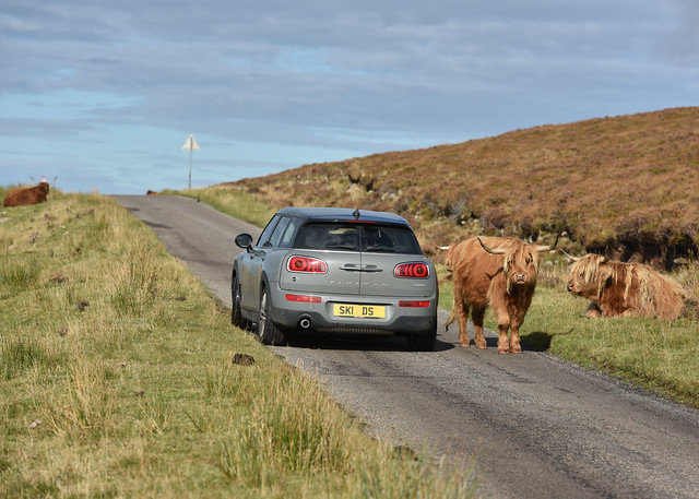 Cattle Drive...
