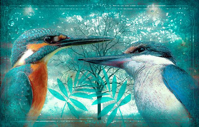 Kingfisher Love