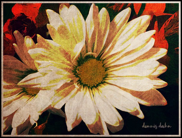 A Daisy or Two
