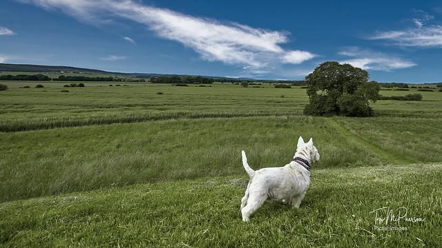 Surveying the 'Laich O' Moray