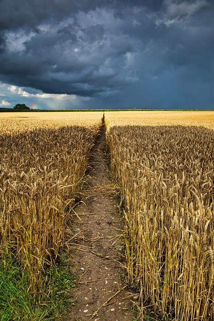 A Barley Walkthrough  (Explored 29-07-2021 )